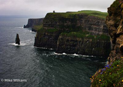 Cliffs of Moher with blue and yellow flowers