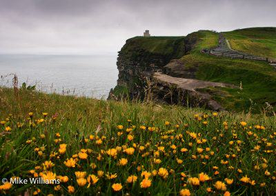 Cliffs of Moher with yellow flowers